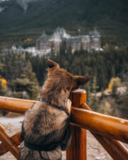 FAIRMONT BANFF SPRINGS CELEBRATES SPCA PARTNERSHIP WITH ADOPTION CAMPAIGN